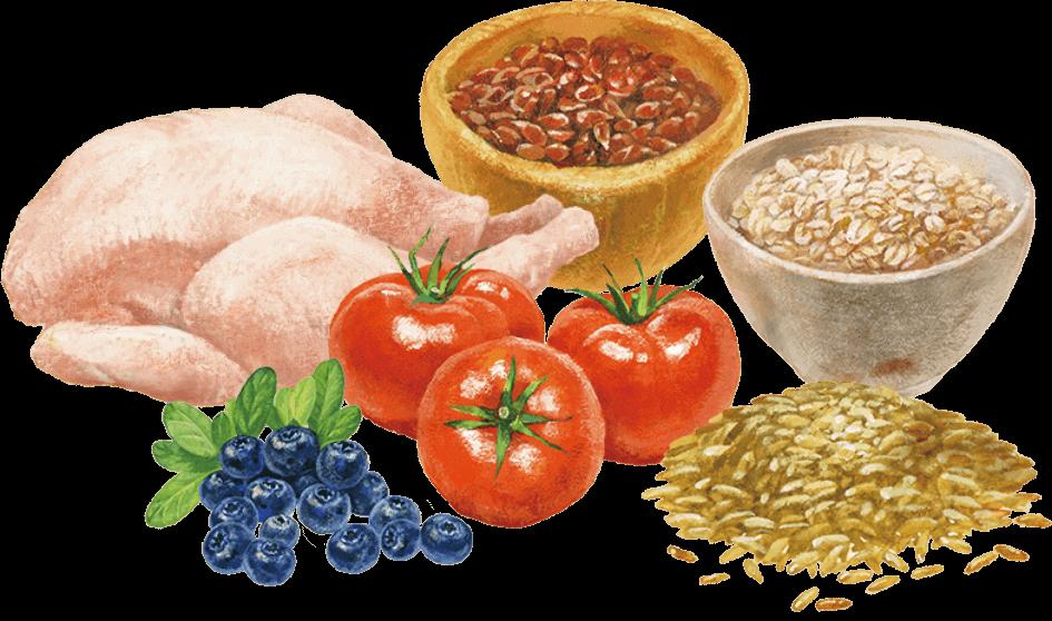 自然素材を活かした総合栄養食