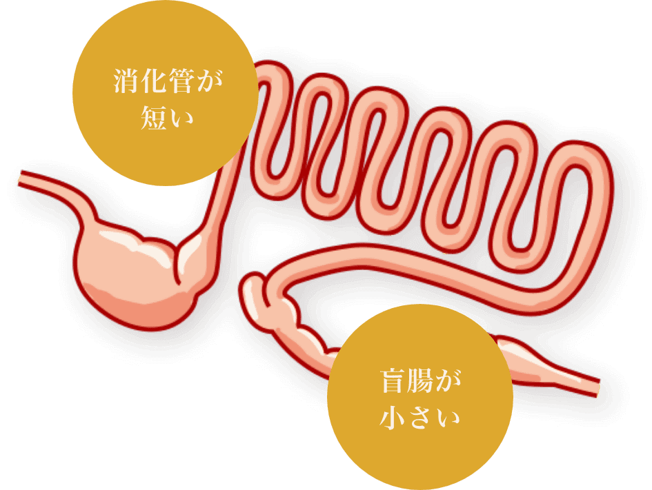 肉の消化に適した消化器系