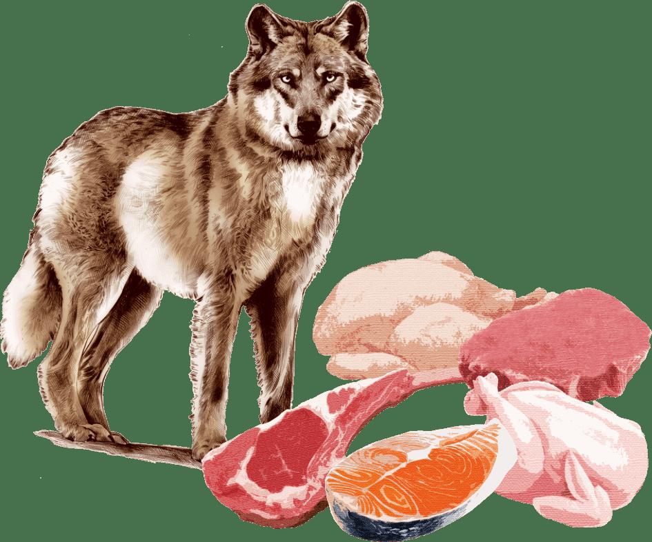 高品質な肉や魚をふんだんに使用