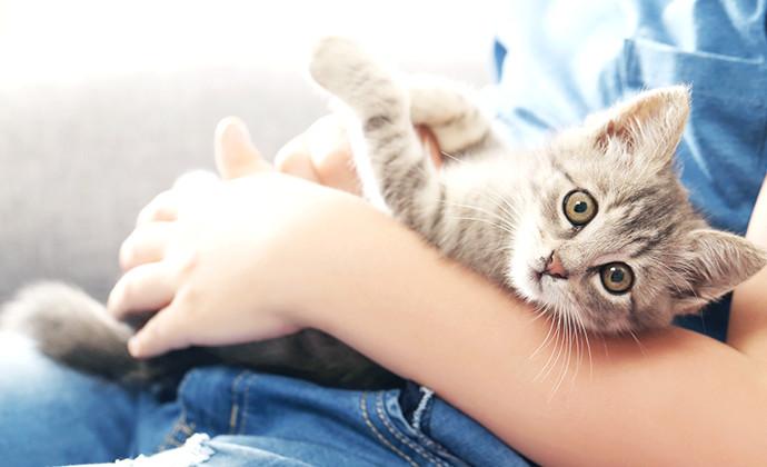 猫のノミ駆除から爪切りまで!まるごと子猫のお世話の仕方